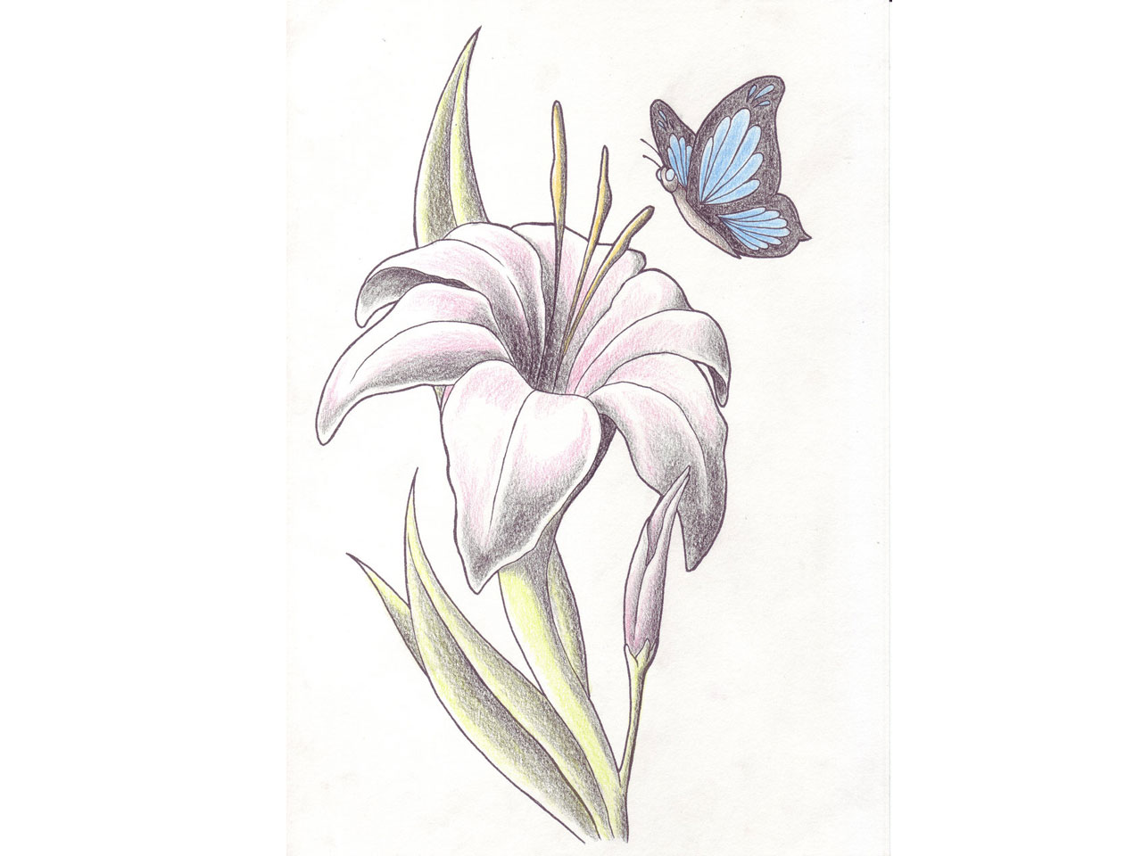 White lily tattoo designs images for tatouage white lily tattoo designs within classic lily flower with butterfly tattoo design izmirmasajfo