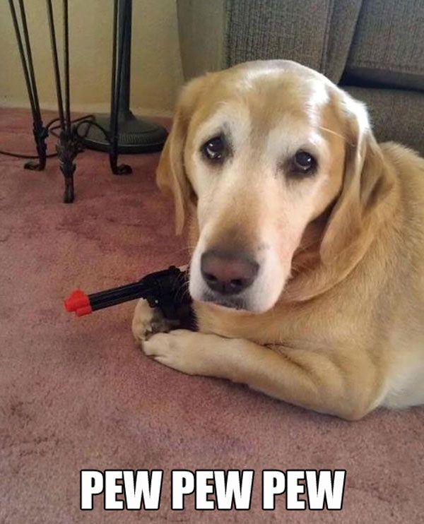 Dog With Gun Funny Animal Image