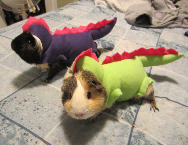 Dragon-Guinea-Pig-Costume-For-Pet.jpg
