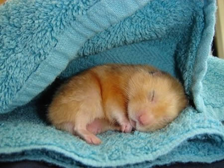 Baby hamsters sleeping together - YouTube  Cute Baby Hamsters Sleeping