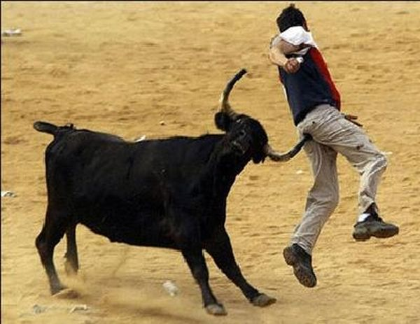 Funny Bull Fight Sport Moment
