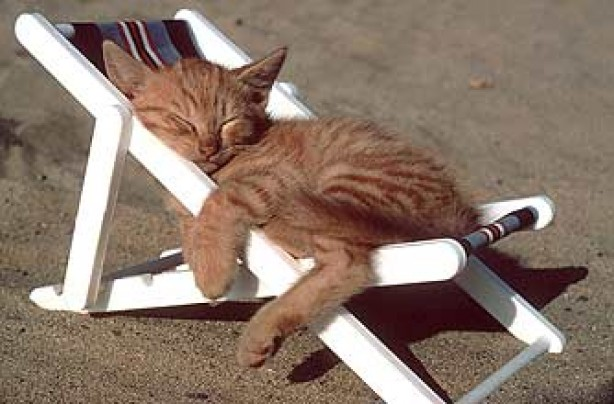 Image result for cats on a beach