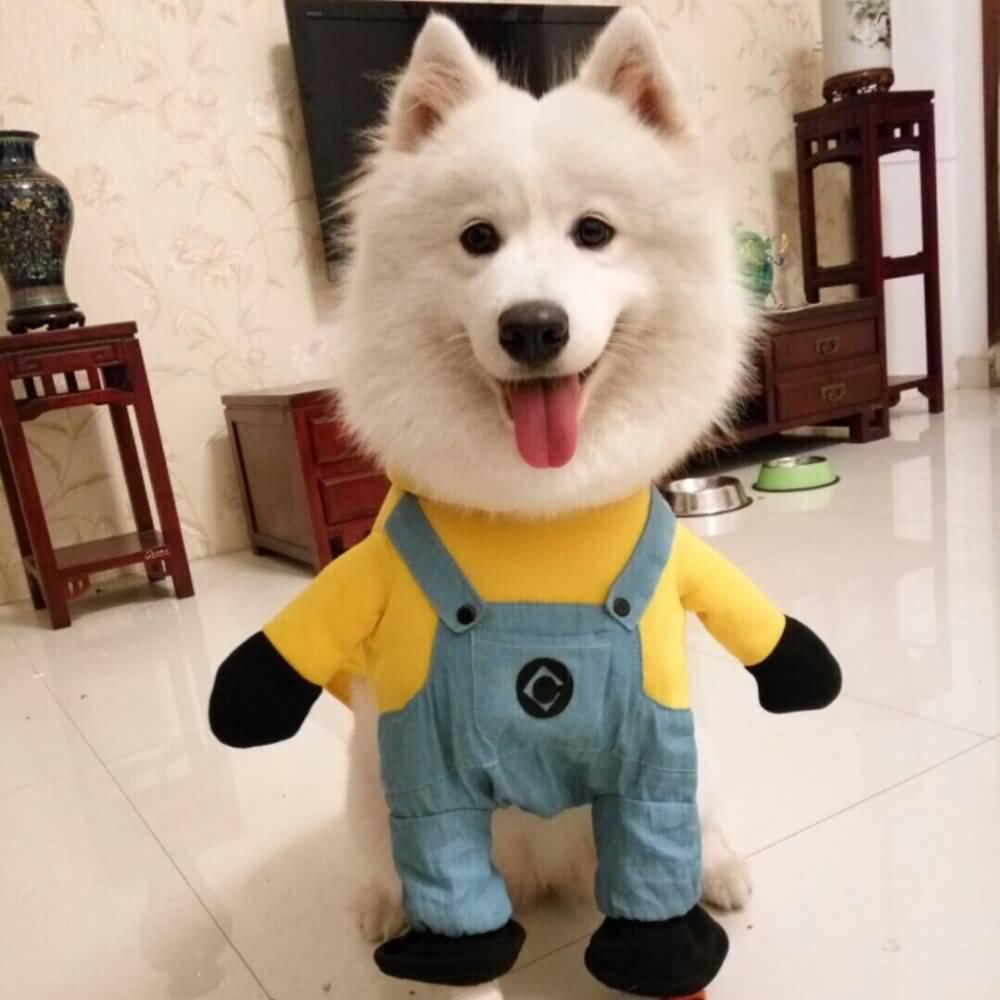 Best Small Dog Halloween Costumes