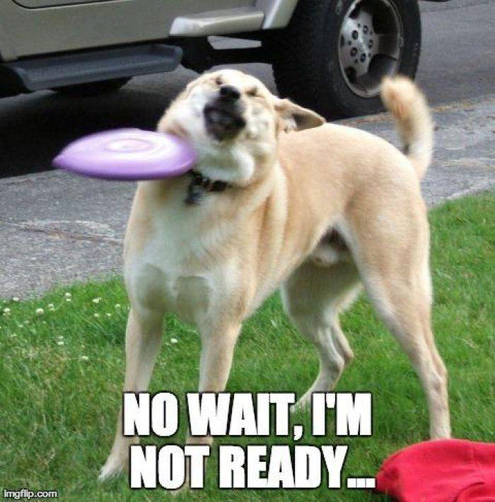 Funny Dog Hit By Frisbee funny dog hit by frisbee