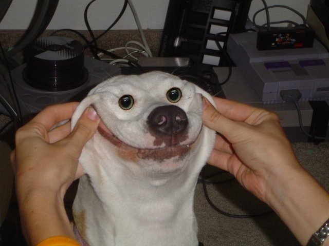 anjing Hewan Peliharaan Paling Setia