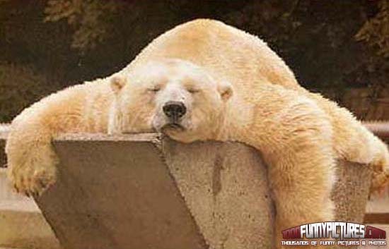 50 Very Funny Sleeping Animal Pictures And Photos