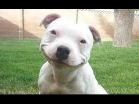 Funny Smile Face Dog