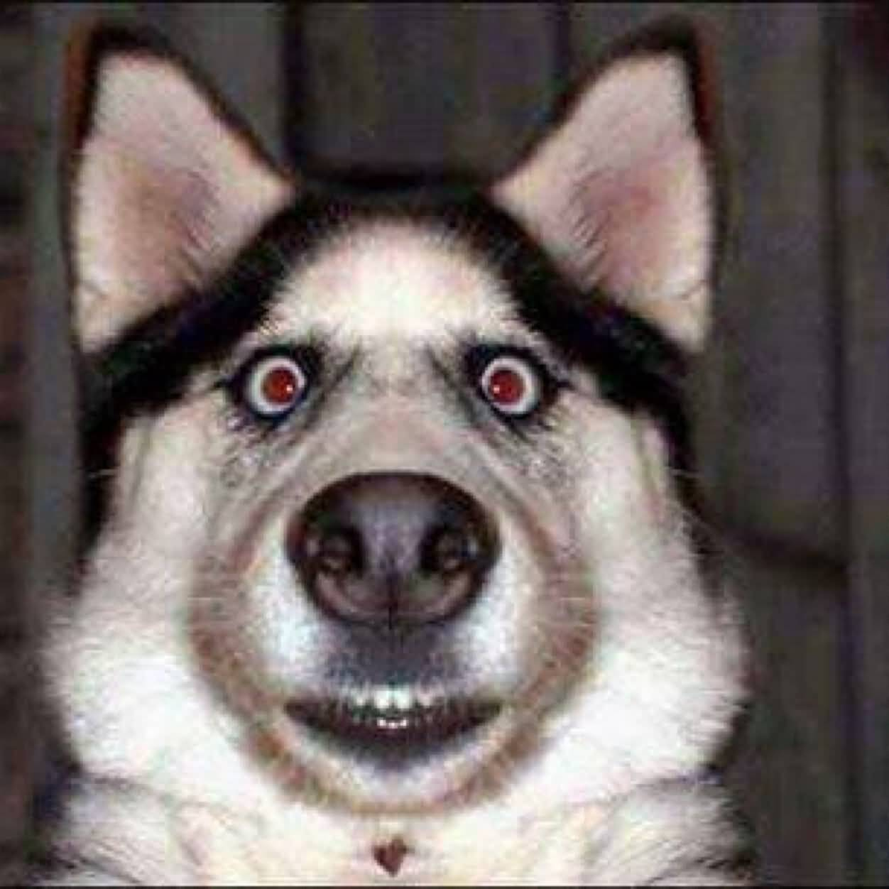 Funny surprised face dog picture voltagebd Gallery