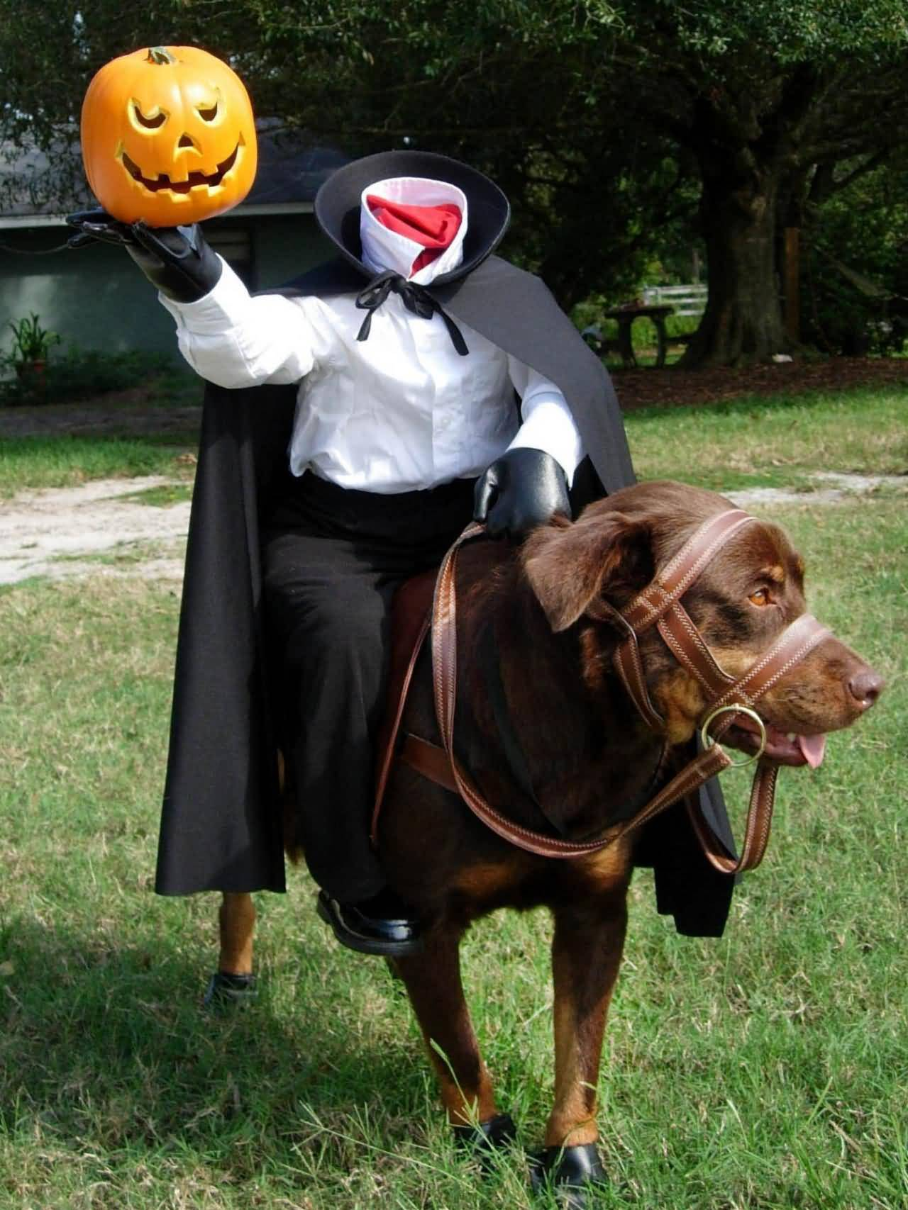 Funny Seal Costume For Pet & Headless Horseman Dog Costume - Meningrey
