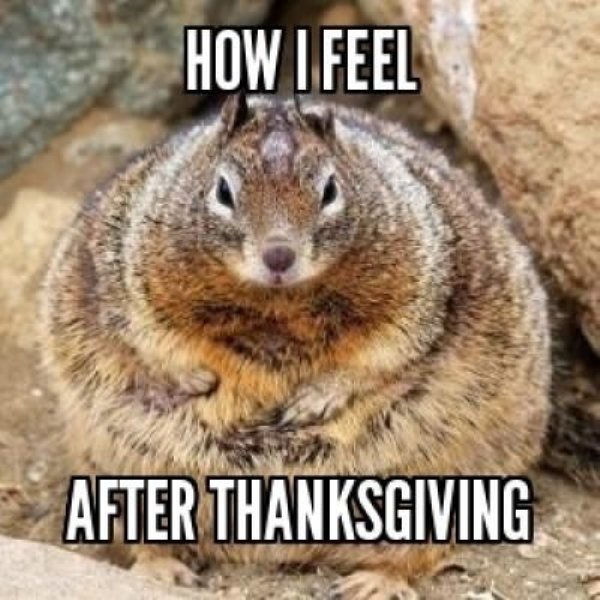 How I Feel After Thanksgiving Funny Picture 27 most funniest thanksgiving pictures on the internet