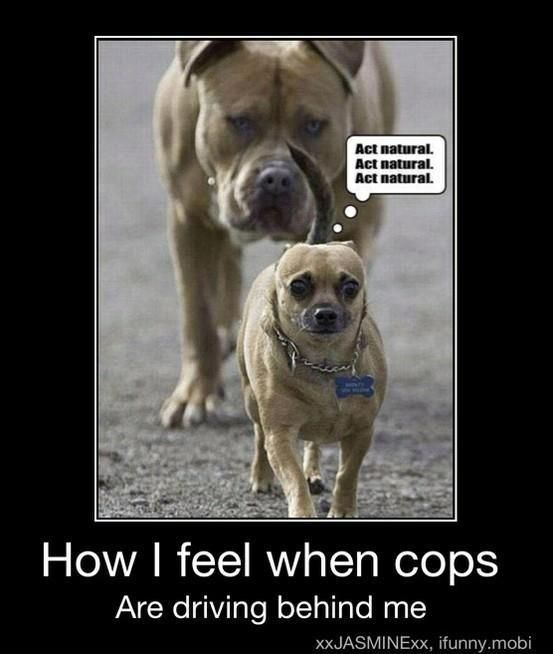 how i feel when cops are driving behind me funny dog picture