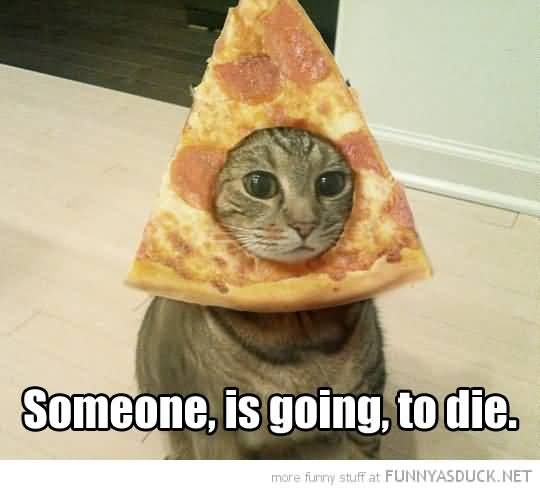 Someone Is Going To Cat With Pizza Funny Picture