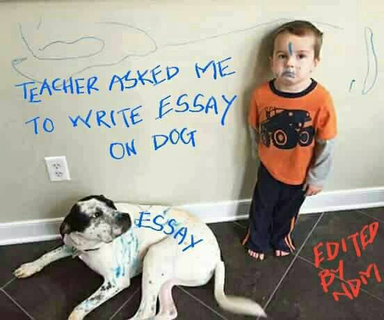 teacher asked me to write an essay on dog