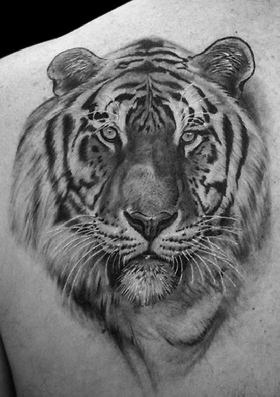 66 Black And Grey Tiger Tattoos Collection