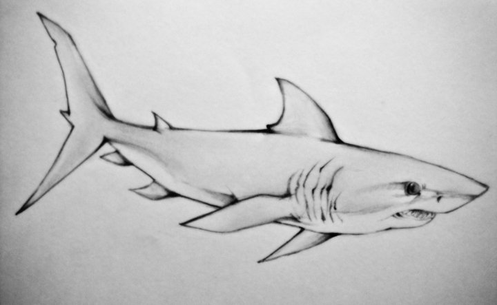 Classic Grey Ink Shark Tattoo Design