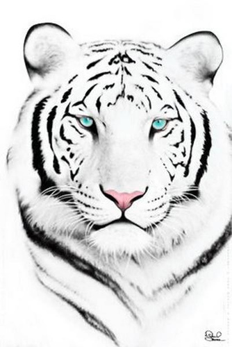 44 best white tiger tattoos ideas with meaning for Cool tiger tattoos