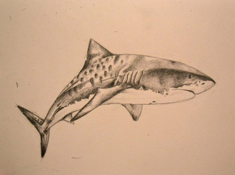 62 Best Shark Tattoo Designs Ideas