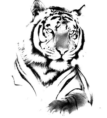 Grey And Black Simple Tiger Tattoo Design