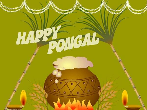Happy Pongal Sugarcane And Pot Of Milk Picture