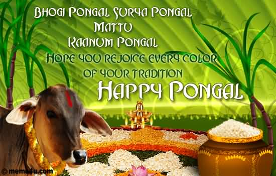 35 adorable pongal 2017 wish pictures and images hope you rejoice every color of your tradition happy pongal m4hsunfo