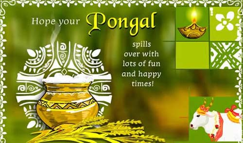Hope Your Pongal Spills Over With Lots Of Fun And Happy Times