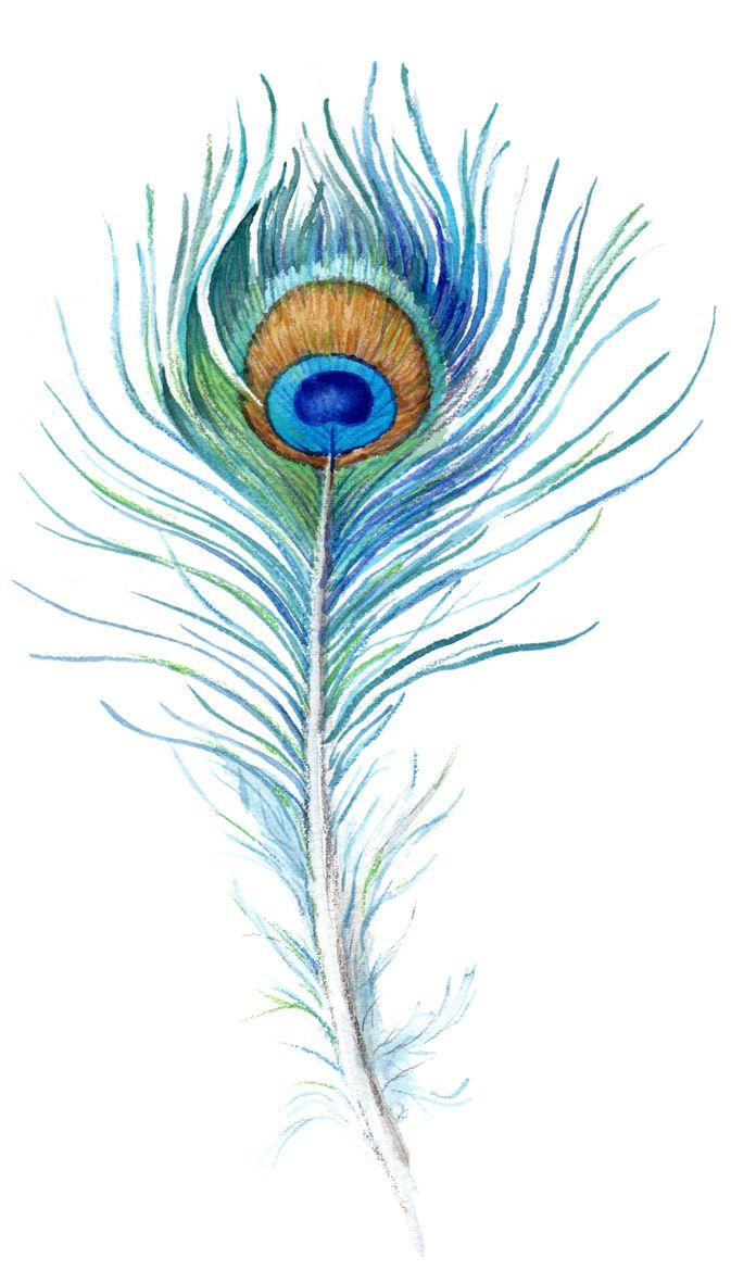 50 beautiful peacock feather tattoos ideas - Beautiful peacock feather ...