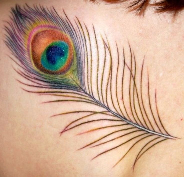 40 peacock feather tattoos for girls for Peacock tattoo on back