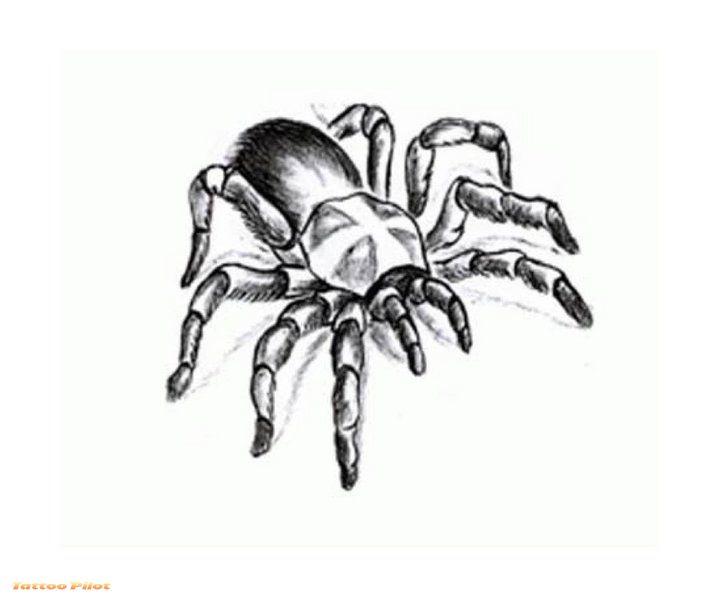 24+ Mind Blowing Spider Tattoos Designs