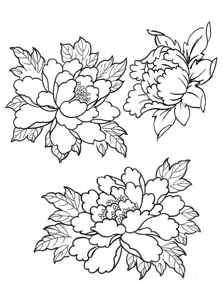 Line Drawing Flower Tattoo : Amazing peony outline tattoos