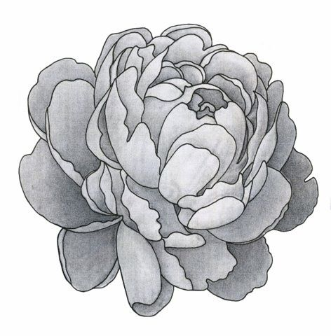 Awesome Black And White Peony Flower Tattoo Design