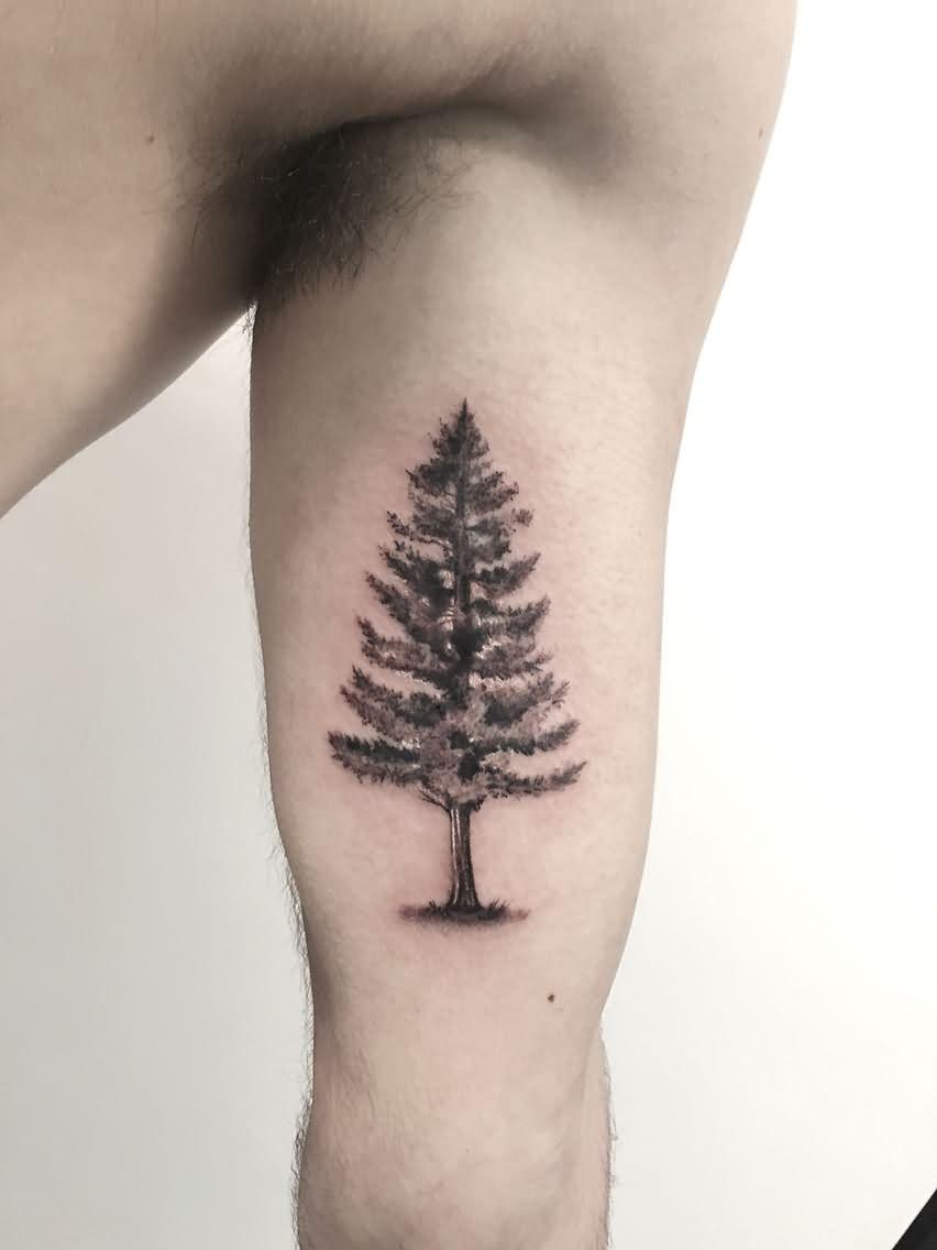 47 best pine tree tattoos design and ideas for Pine tree tattoo ideas