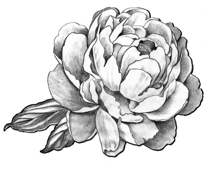 Black And White Peony Flower Tattoo Design