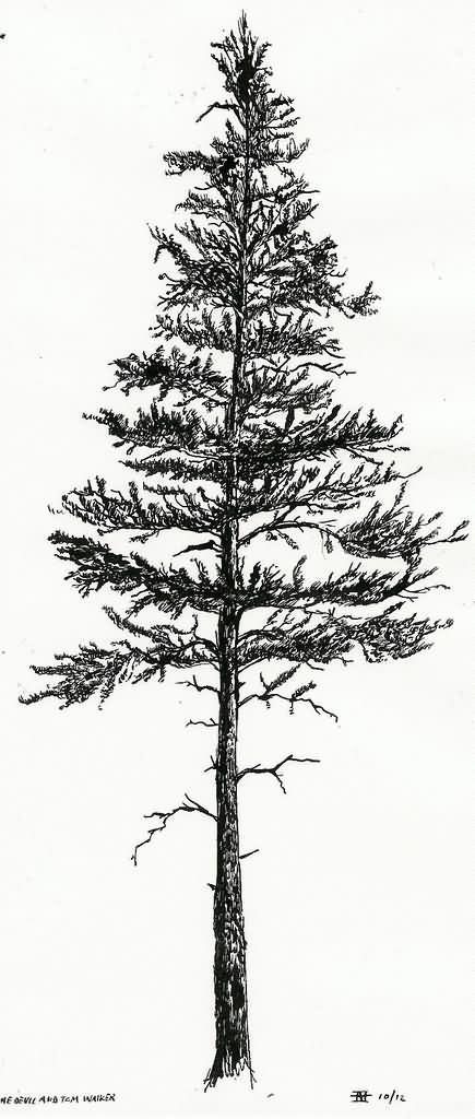 Skinny Tall Christmas Tree
