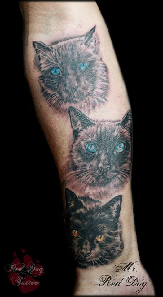 Black Ink Three Cat Face Tattoo On Forearm