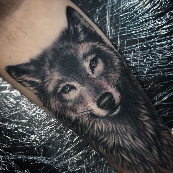 8d12ed231 Black n Grey Wolf Tattoo On Right Forearm