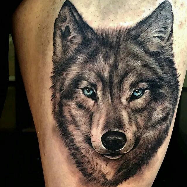 46 Unique Wolf Head Tattoos Ideas: Blue Eyes Wolf Head Tattoo On Thigh