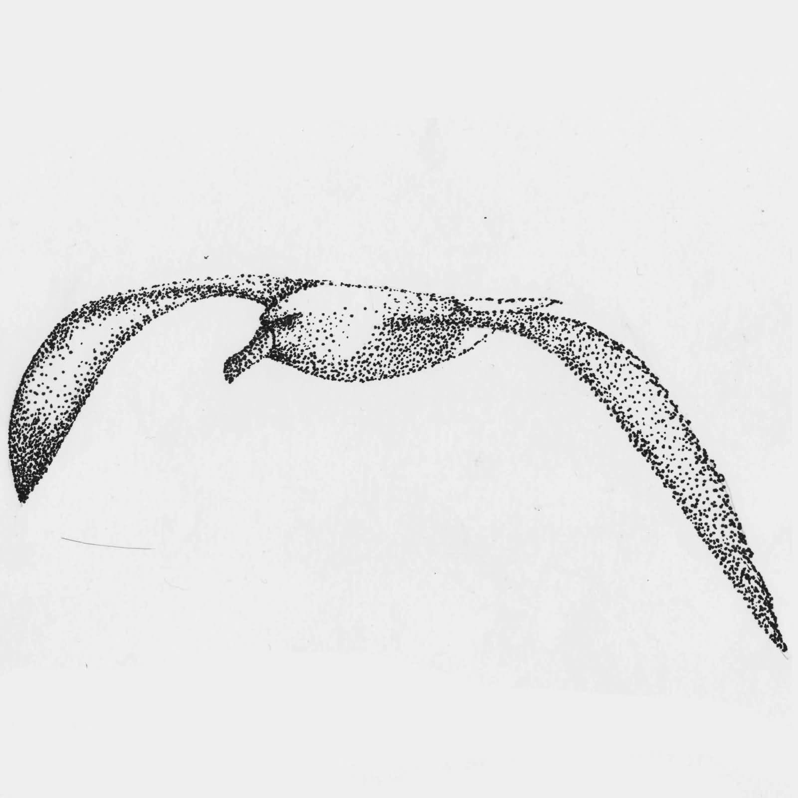 38 Best Albatross Tattoos Design And Ideas