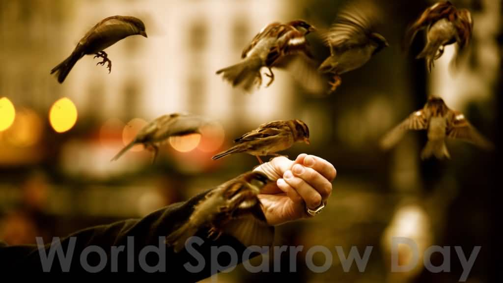 20th march world sparrow day quote