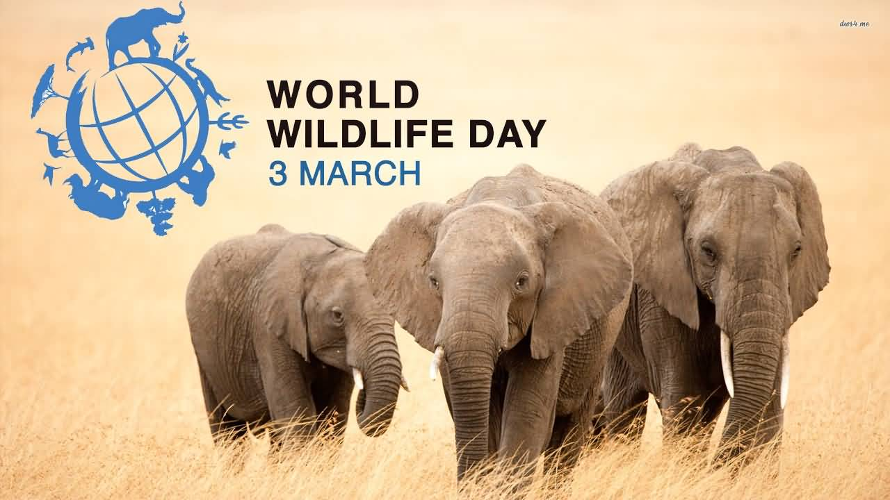 World Wildlife Day 3 March Elephants Picture
