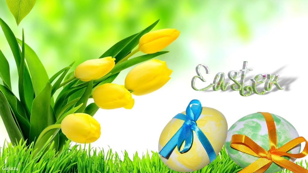 Easter Greetings Yellow Tulip Flowers And Gift Wrapped Eggs