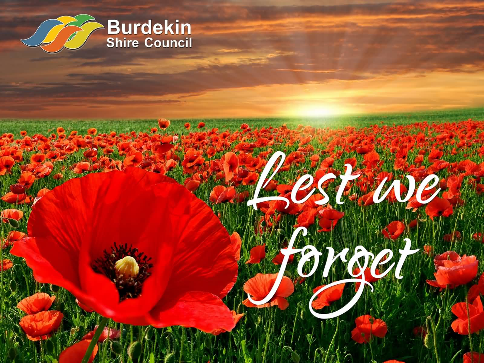 Lest we forget anzac day poppy flowers field picture mightylinksfo