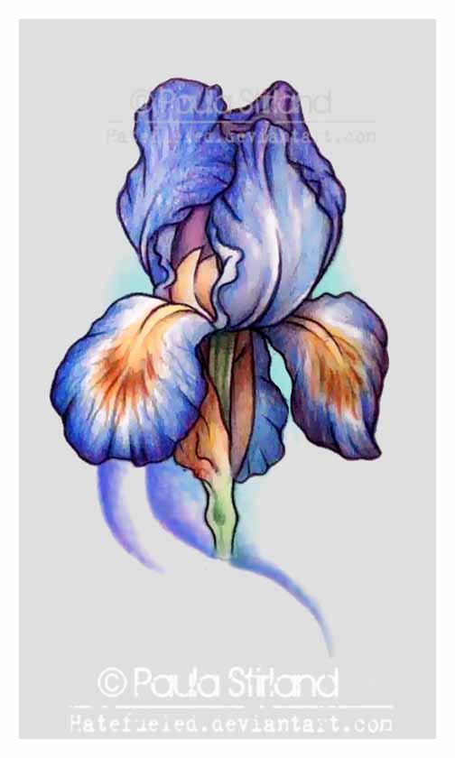 9591a9060 Attractive Purple Ink Iris Flower Tattoo Design By Hatefueled