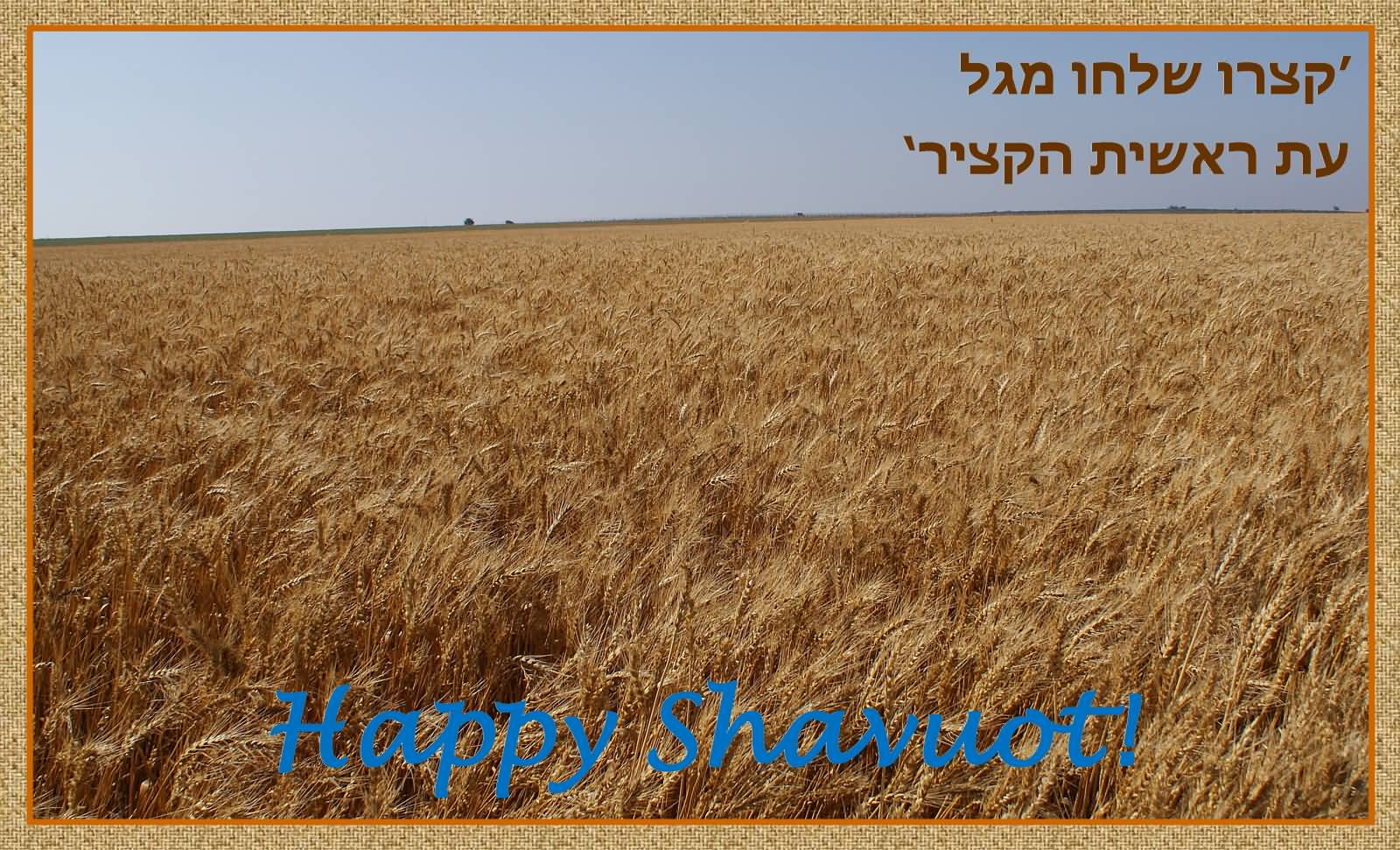 Happy Shavuot Field Of Wheat