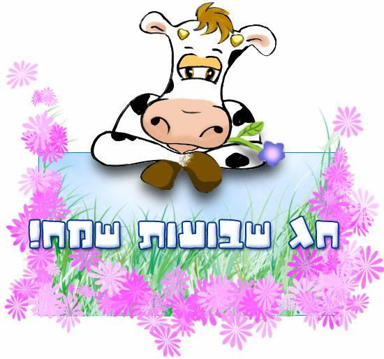 Happy Shavuot Hebrew Text Sad Cow Cartoon Picture