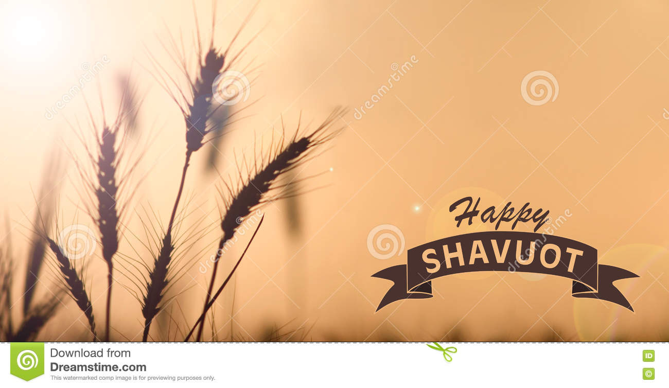 Happy Shavuot Wheat Crop Illustration