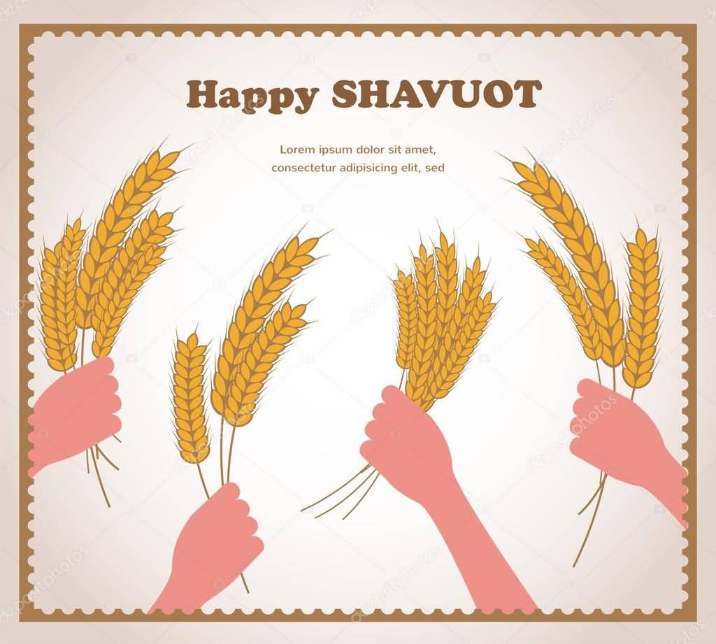 Happy Shavuot Wheat In Hands Illustration