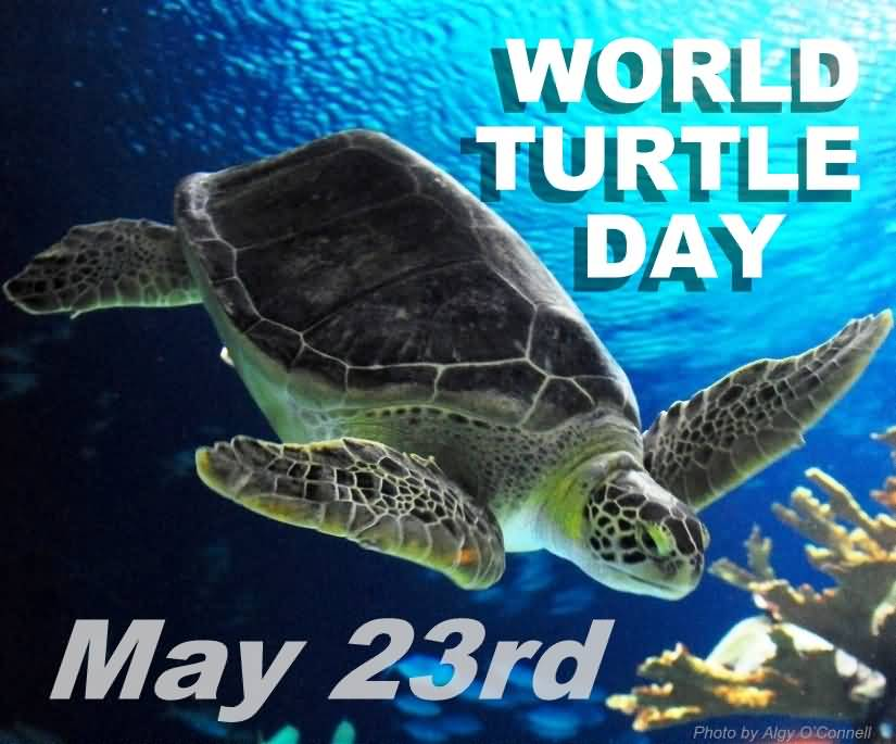 world turtle day World turtle day is an annual event that has been taking place since 2000 it was founded by american tortoise rescue the purpose of world turtle day is to educate people about the things that they can do to protect the habitats of turtle and tortoises.