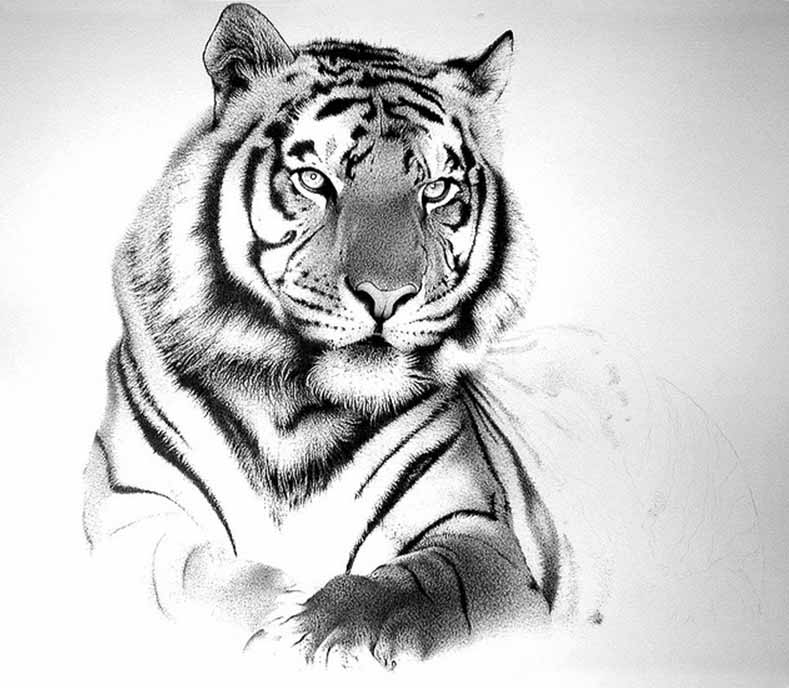 Tattoo Designs Tiger: Black And Grey Bengal Tiger Tattoo Design