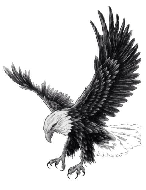 Black And White Flying Eagle Tattoo Design