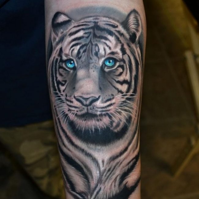 Blue Eyes White Tiger Tattoo On Forearm